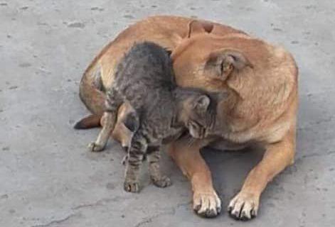 Liefde tussen kat en hond in Cairo